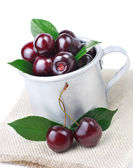 Black cherry — Stock Photo