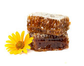Honey comb with a yellow flower — Stock Photo