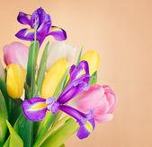 Flores lindas da primavera — Foto Stock
