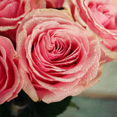 Pink rose close-up. — Stock Photo