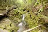 Arroyo del bosque — Foto de Stock