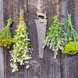 Various herbs bunches on wooden wall — Stock Photo
