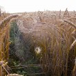 Autumn crop fields with morning dewy spider-web — Stock Photo #12610082