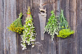 Various herbs bunches on wooden wall — Stockfoto