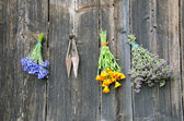 Various medical herbs on old wooden wall — Stock Photo