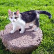 Stock Photo: Young cat on old millstone