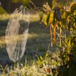 Autumn morning dewy spider-web — Stock Photo