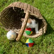 Kitten playing in old basket with globe — Stock Video