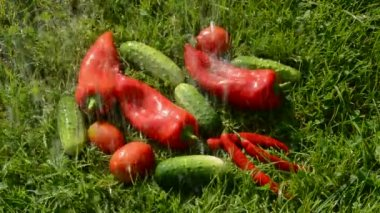 Washing cucumbers and red peppers on the grass — Stock Video