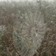Morning dewy spider-web — Stock Video