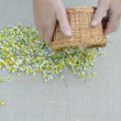 Stock Video: Chamomile medical blossoms on linen cloth