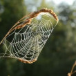 Stock Video: Summer end time spider-web in morning