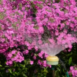 Stock Video: Watering flowers in garden