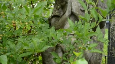 Vintage ängel skulptur på gamla kyrkogården — Stockvideo