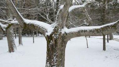 Vinter träd och snö i park — Stockvideo