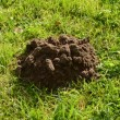 Molehill on garden grass — Wideo stockowe #13170431