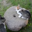 Cats and old millstone in garden — Stok Video #13243861