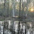 Spring forest landscape and sunset — Stok video