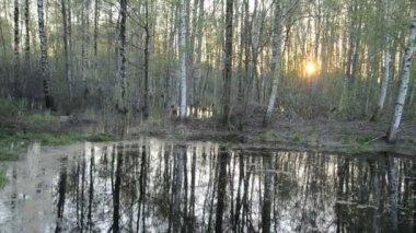 Jarní lesní krajina a západ slunce — Stock video