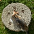 Stock Video: Young cat on old millstone