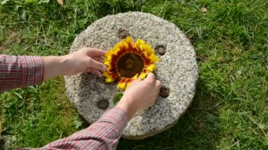 Put harvest time food ingredients on old millstone — Stock Video
