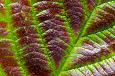 Autumn blackberry leaf macro background — Foto de Stock