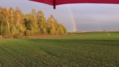 Crop field with rainbow and red umbrella — Stock Video