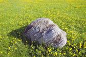 Kamień naturalny granit na wiosna łąka — Zdjęcie stockowe