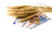 Wheat ears and euro money on white — Stock Photo