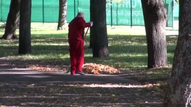 Worker raking autumn leaves in park — Stock Video