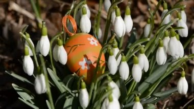 Oeuf de pâques dans le perce-neige et le vent de printemps — Vidéo