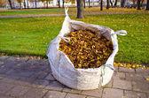şehir parkında büyük çuval ile sonbahar yaprakları — Stok fotoğraf