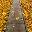 Concrete park path through autumn leaves — Stock Photo #15365469