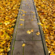 Stock Photo: Concrete park path through autumn leaves