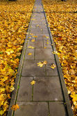 Concrete park path through autumn leaves — Stock Photo