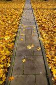 Concrete park path through autumn leaves — Stock Photo