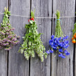 Summer medical herbs bunches on wooden wall - Stock Photo