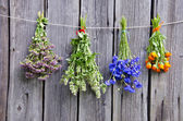 Summer medical herbs bunches on wooden wall — Stock Photo
