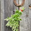 Stock Photo: Lemon-balm healthy herbs and rusty horseshoe