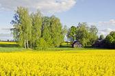 Landsbygdens landskap med barn- och våldtäkter — Stockfoto