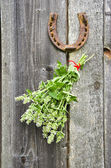 Lemon-balm healthy herbs and rusty horseshoe — Stock Photo