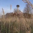 Autumn farm ruins in eastern Europe — Stock Video