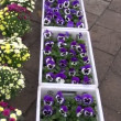 Various flowers in agriculture fair — Stock Video #18647269