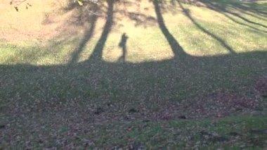 Videografen schaduw wandelen in herfst park — Stockvideo