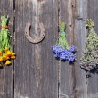 Medical herbs bunch on wall and rusty horseshoe - Stockfoto