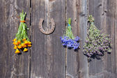 Medical herbs bunch on wall and rusty horseshoe — Stock Photo