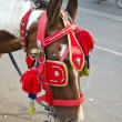 Horse with ornate bridle and hood in Agra, India — Stock Photo #21001961