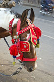 Horse with ornate bridle and hood in Agra, India — Stock Photo
