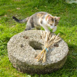 Young cat on old millstone in garden — Stock Photo