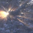 Stock video: Winter sunlight and forest fir background in motion